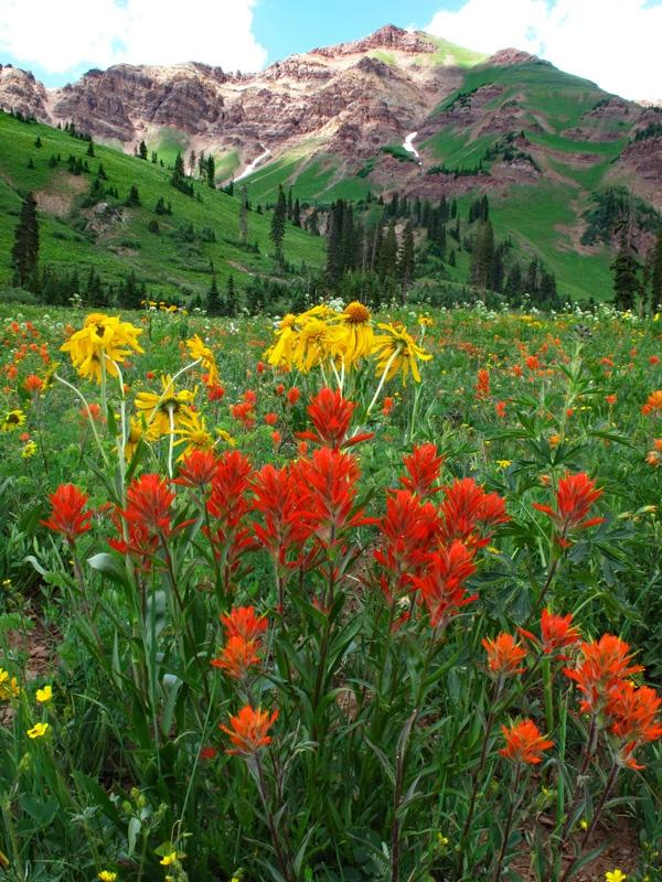 Rustler Gulch Meadow